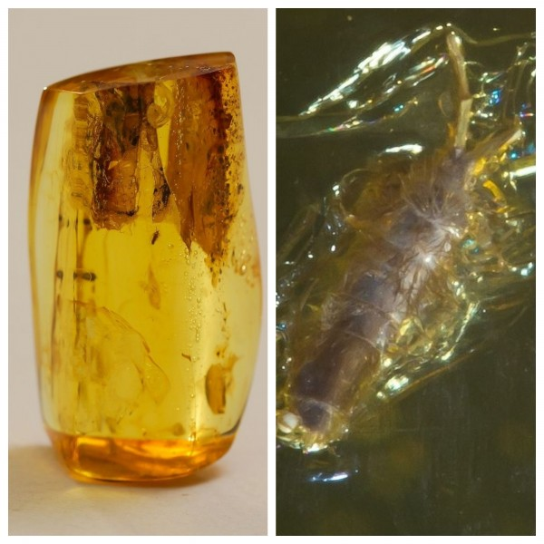 13 g. Baltic amber inclusion insect faceted natural