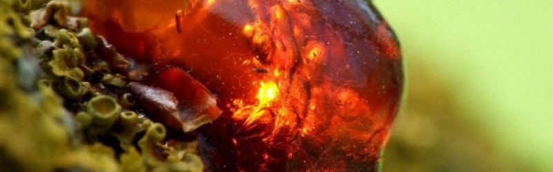 Legends and Myths About Amber